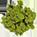 Mousses et champignons décoratifs